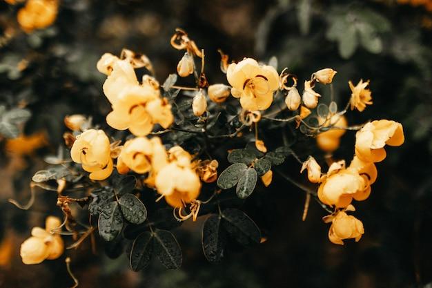 녹색 잎과 노란 꽃을 가진 식물의 가로 근접 촬영 무료 사진