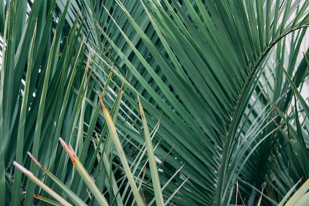 날카로운 잎을 가진 조밀 한 야자수의 수평 샷 무료 사진
