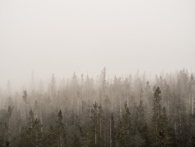Горизонтальная съемка туманного леса с высокими деревьями в тумане Бесплатные Фотографии