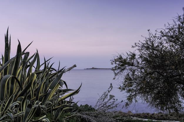 Горизонтальная съемка зеленого растения и голого дерева около красивого моря под ясным небом Бесплатные Фотографии