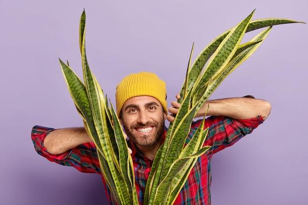 幸せな無精ひげを生やした男性の花屋の水平方向のショットは、sansiveriaに手を保ち、黄色い帽子と市松模様のシャツを着て、紫色の背景の上に隔離され、自宅で屋内植物を育てます。 無料写真