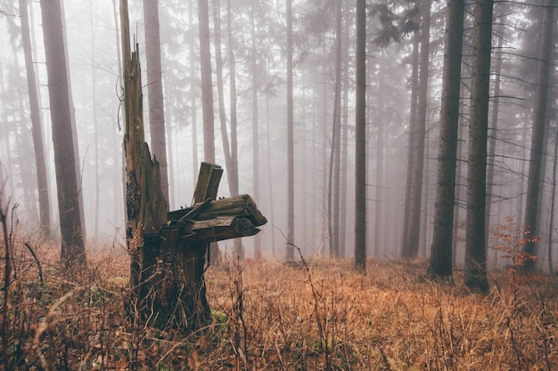 Horizontal shot of a stump in a foggy forest full of dry grass and leafless trees Free Photo