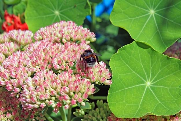 秋flowersesのスズメバチ Premium写真