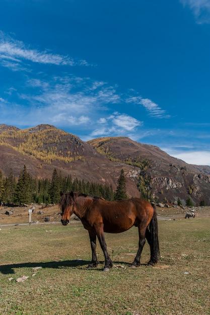 The horse on the background of mountainous terrain Premium Photo
