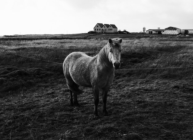 Horse in black and white Free Photo