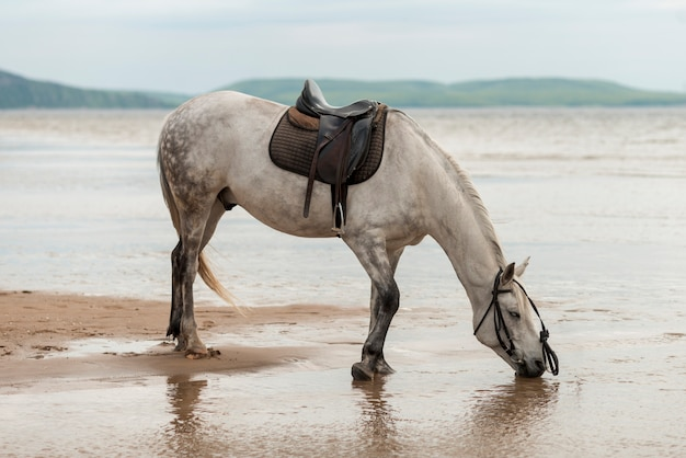 Horse drinking water on the beach Free Photo
