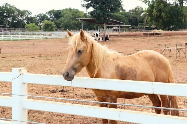 Horse in the farm Premium Photo