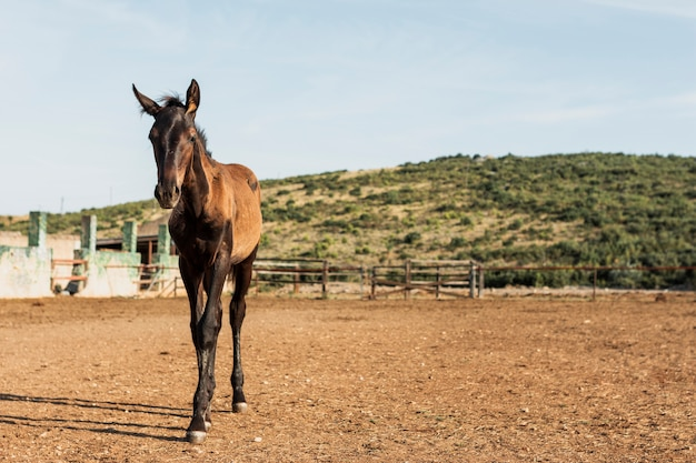 Horse foal standing on a ranch Free Photo