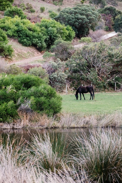 Horse in forest Free Photo