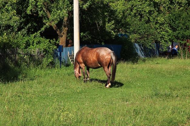 Horse in the grass Premium Photo