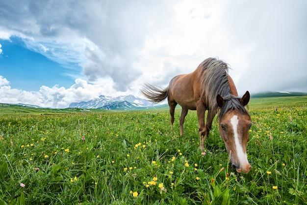 산 계곡, Laganaki, 러시아에서 방목하는 말 프리미엄 사진