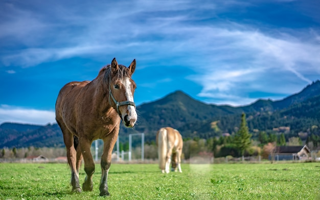 Horse in grazing land Premium Photo