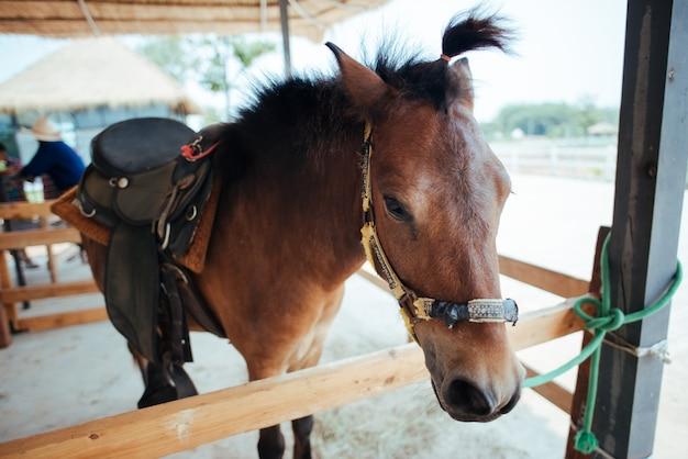 Horse at horse farm Free Photo