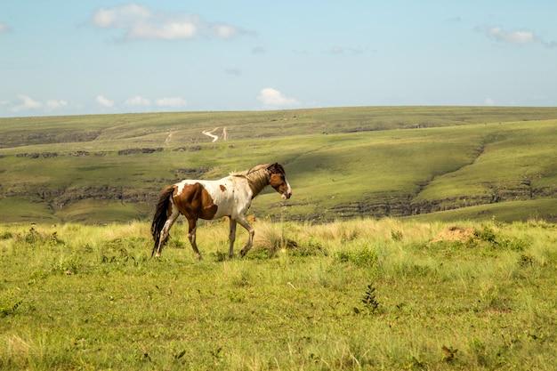 Horse in montain national park brazil Premium Photo