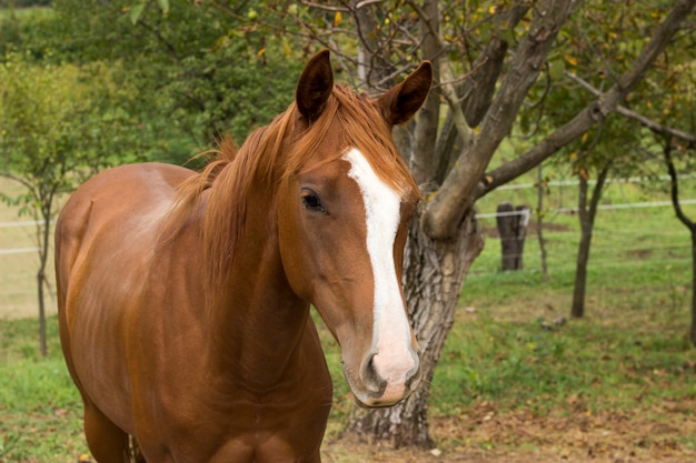 Horse on nature. portrait of a horse, brown horse Premium Photo