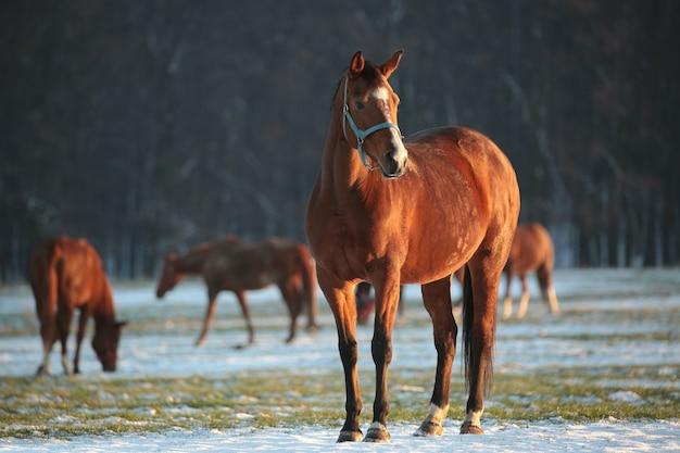 木の背景に馬 Premium写真