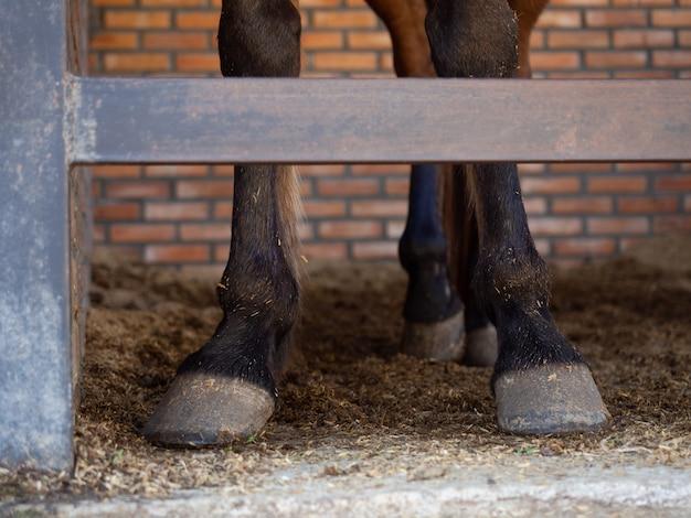 Horse's legs standing in stable Premium Photo