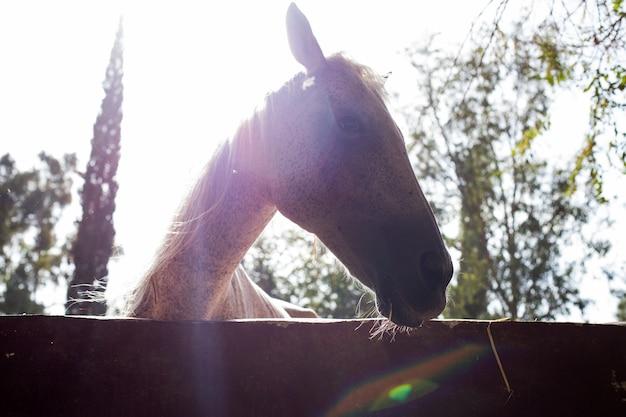 Horse silhouette Free Photo