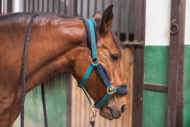 Horse in the stable Premium Photo