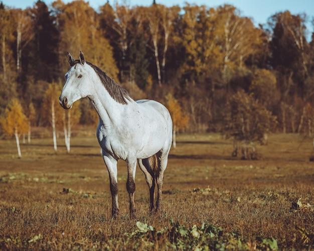 Horse walking Free Photo