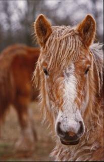 Horses, closeup Free Photo