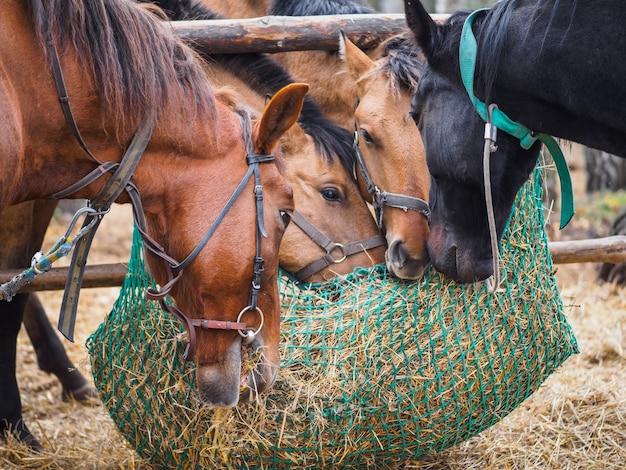 馬はメッシュフィーダーから干し草を食べる Premium写真