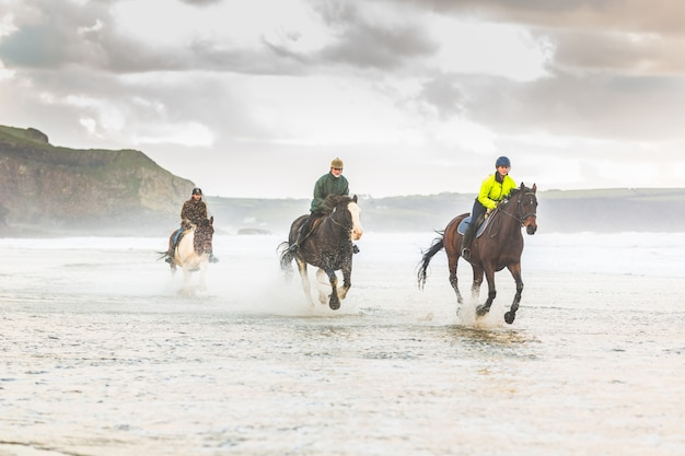 Horses galloping on the beach Premium Photo
