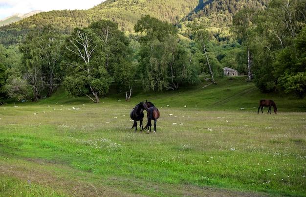 Лошади обнимаются на природе. Premium Фотографии