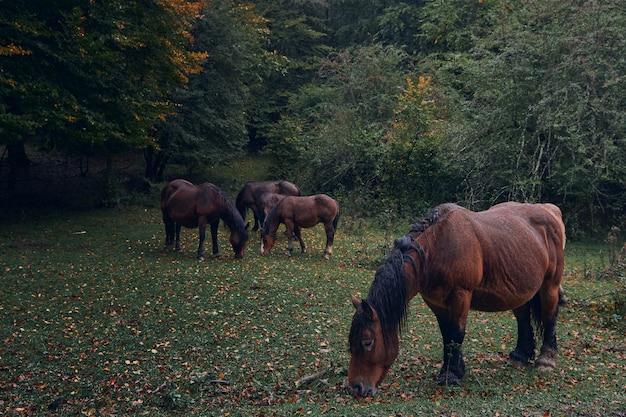 秋の森の中で雨の中の馬 Premium写真