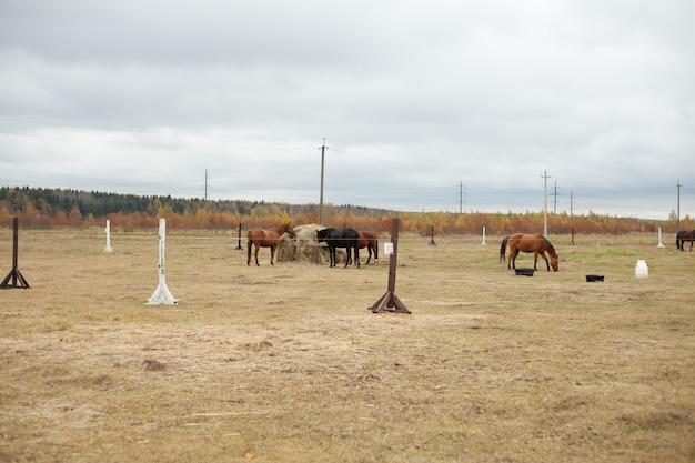 秋のフィールド上の馬 Premium写真