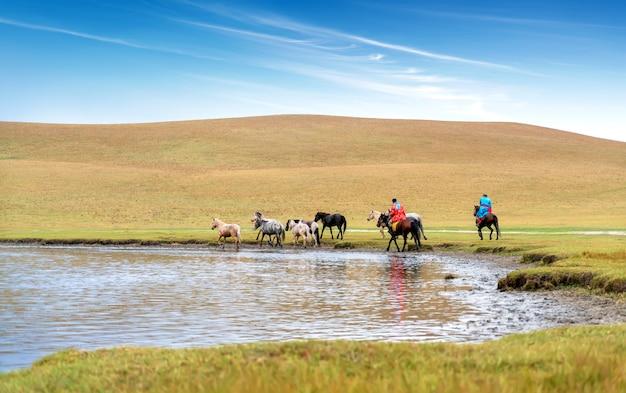Horses on the prairie Premium Photo