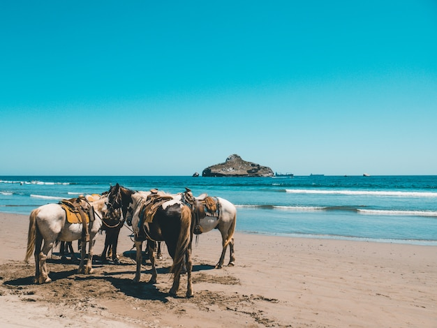 Horses standing by the beach next to the clear blue sea and a mountain Free Photo