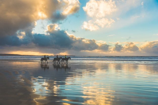 Horses walking on the beach at sunset Premium Photo