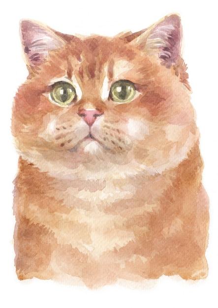 Акварельная живопись hosico cat Premium Фотографии
