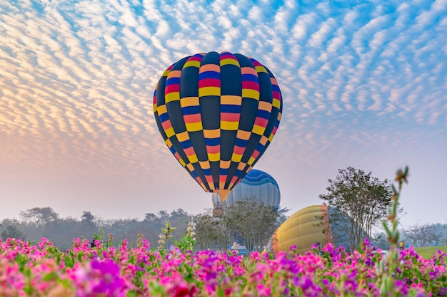 Hot air balloons flying over flower field with sunrise at chiang rai province, thailand Premium Photo