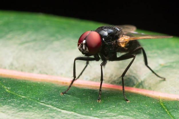 House fly on green leaf Premium Photo