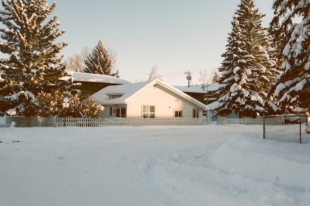 House with snowy pine trees in winter Free Photo