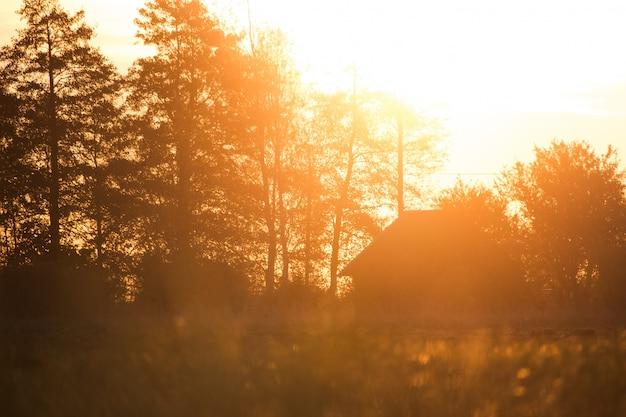 Casa con alberi ad alto fusto e bel sole Foto Gratuite