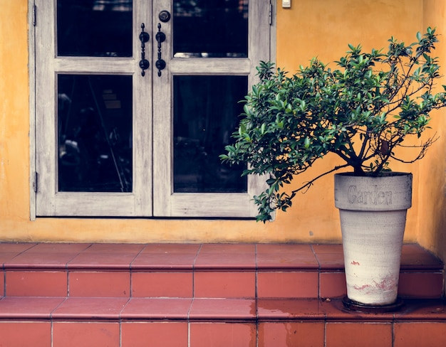 Decorazione di fogliame floreale naturale houseplant Foto Gratuite