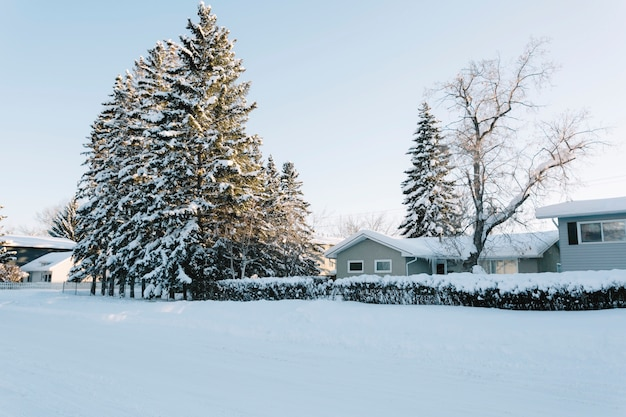 Houses with pine trees in winter Free Photo
