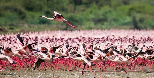 離陸するフラミンゴの巨大な群れ Premium写真