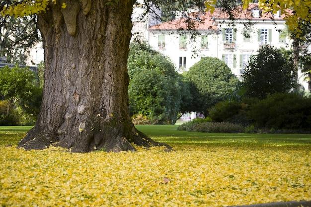 Огромное дерево в окружении желтых листьев посреди сада днем Бесплатные Фотографии