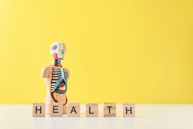 Human anatomy mannequin with internal organs and word health on a yellow background. medical health concept Premium Photo