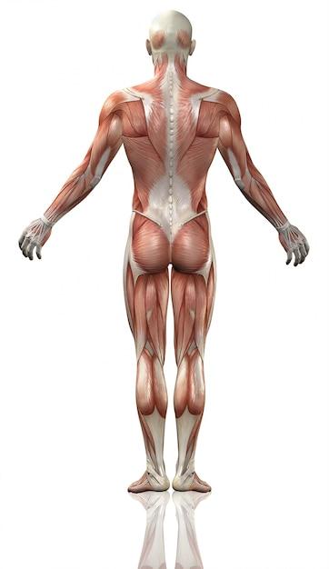 Human Body Photo Free Download