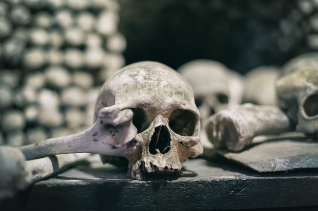 Human bones and skulls close up Premium Photo