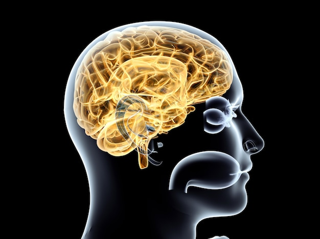 The human brain. 3d rendered illustration. isolated on black. Premium Photo