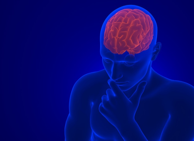 Human brain in x-ray. 3d illustration. contains clipping path Premium Photo