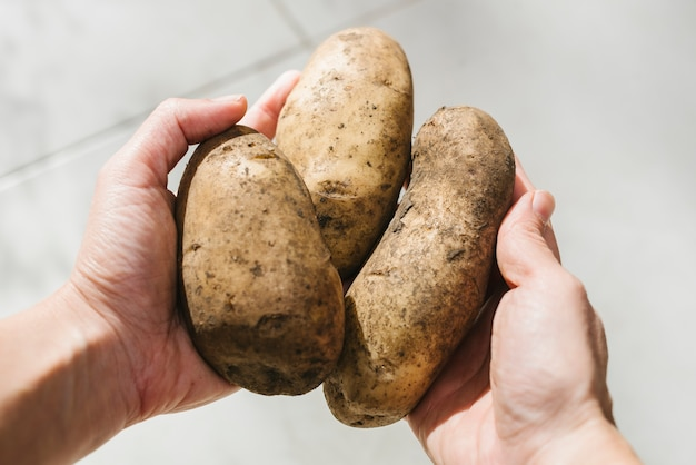 Human hand holding organic potatoes Free Photo