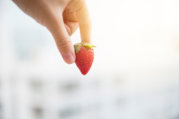 Human hand holding red whole organic strawberry over blurred background Free Photo
