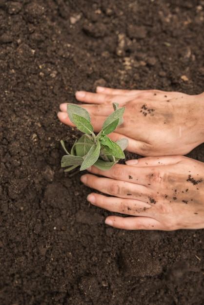 Human hand planting fresh young plant into soil Free Photo